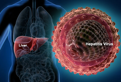 liver_and_hepatitis_virus